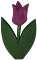 Nedholm tulip dark lila leaves dark green