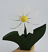 1 Nedholm new flower, white/yellow, dark green leaves